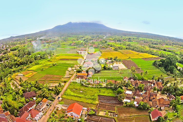 Paddy Field near Mount Karang - Serang